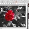 Photoshop – Lasciare un solo colore dentro una foto in bianco e nero